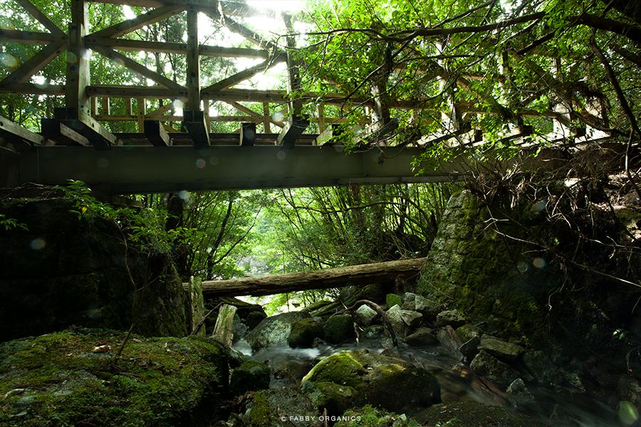 The YAKUSHIMA Island 屋久島 縄文杉・ワンデイ・ピストン トロッコ路